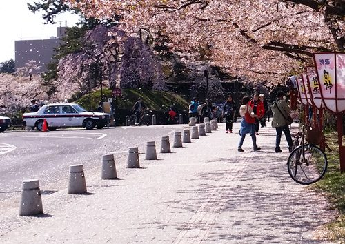 sakura1604_fubuki